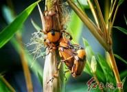 昆虫世界(张永辉/摄影)