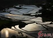 農耕時節,馬羅梯田美(組圖)