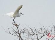 保护野生动植物,构建和谐社会(摄影/张永辉)