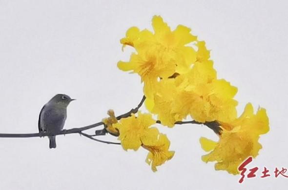 龙津湖的春日(摄影/张永辉)